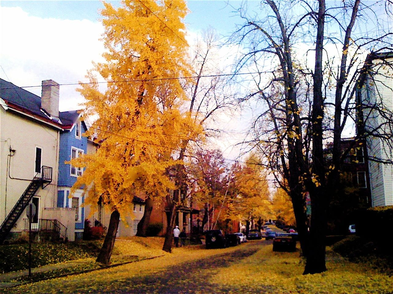 colorful trees, Autumn in Shadyside